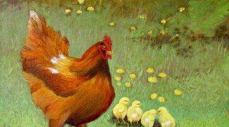 Her flock